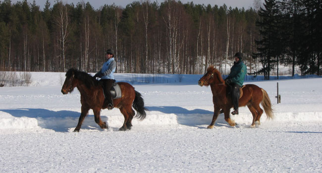 Horse riding in the snow in Iceland