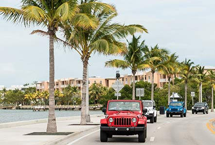 Jeeps driving along tree-lined roads by the ocean