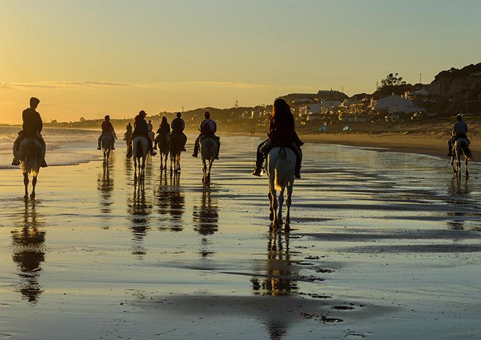 Riding horses along a beach at sunset