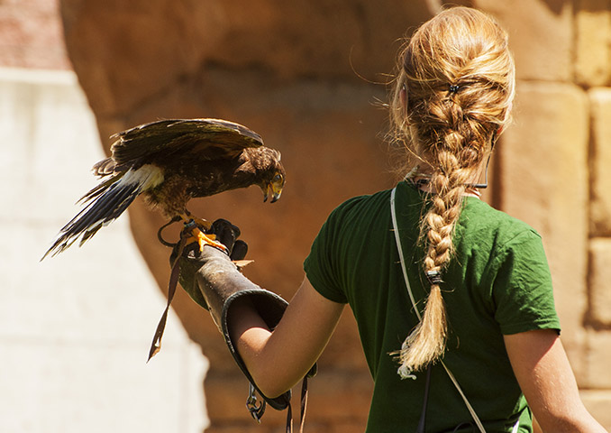 Visit Britain Falconry