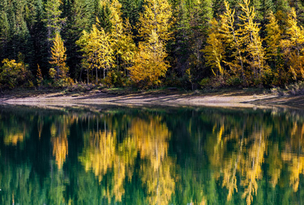 Trees reflected in the water of a still Canadian lake