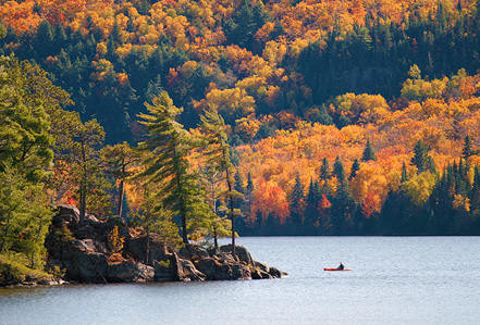 Autumn leaves by a Canadian lake