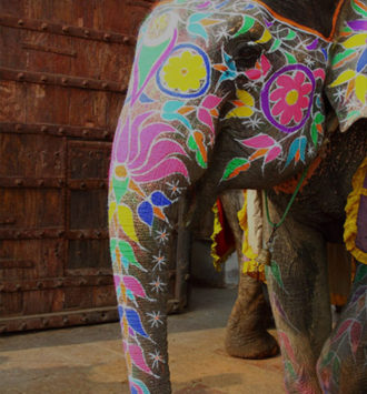 India Group Incentive - Painted Elephant in India