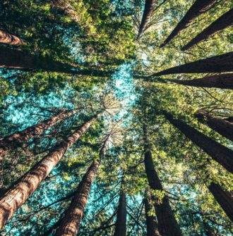 Get back to nature - view of canopy shot from below