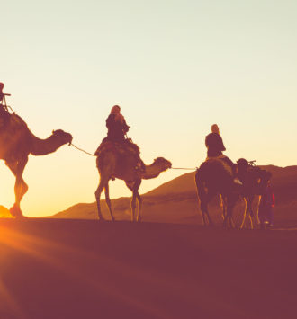 Camel train walking in the dunes of the Sahara Desert at sunset - incentive travel angles